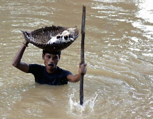 Trong một trận lũ lụt kinh hoàng ở thành phố Cuttack, Ấn Độ vào năm 2011, một người đàn ông đã giải cứu những chú mèo bằng cách để chúng lên chiếc giỏ trên đầu mình và vượt qua dòng nước lũ.