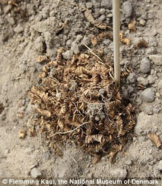 Há hốc mồm trước 2.000 cuộn vàng được tìm thấy