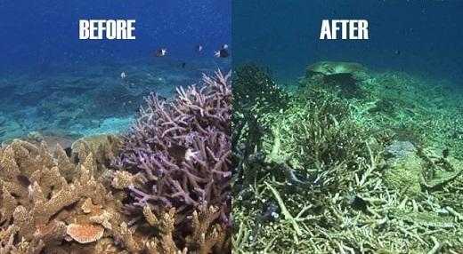 Những rạn san hô đang bị hủy hoại nghiêm trọng.