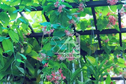 Khoảng sân trước nhà, Hồ Quang Hiếu chủ yếu trồng cây xanh để tạo không gian thoáng mát, dễ chịu. - Tin sao Viet - Tin tuc sao Viet - Scandal sao Viet - Tin tuc cua Sao - Tin cua Sao