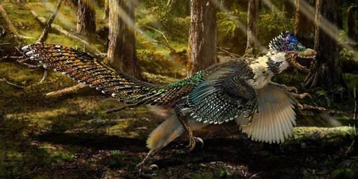 Đây là hình ảnh phục dựng cực đẹp mắt của rồng Zhenyuan với đôi chân, cái đầu và móng vuốt khủng long nhưng lại có cánh và lớp lông vũ không khác gì loài công.