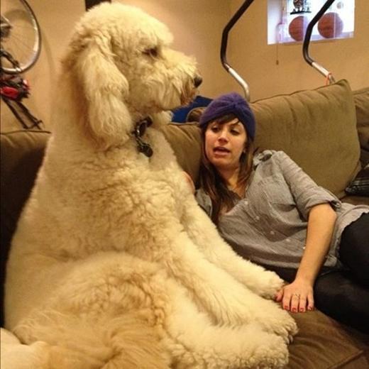 Có con chó lông xù thế này ôm sướng phải biết.