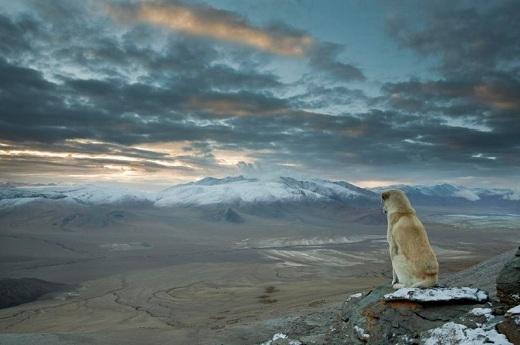 Khí hậu ở dãy núi Himalaya rất đa dạng, từ nhiệt đới ở chân núi đến băng tuyết vĩnh viễn ở tầng cao nhất.