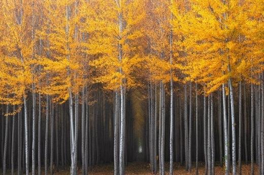 """Nhiếp ảnh gia David Thompson đã chụp lại khoảnh khắc mà anh gọi là """"Hành lang kì bí"""" ở rừng dương phía bắc Oregon."""