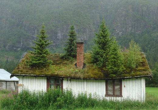 Bạn có muốn biết điều gì tạo nên sự độc đáo cho những căn nhà ở Na Uy không? Đó chính là những cái cây to, xanh um tươi tốt mọc ngay trên mái nhà, tạo nên một khu vườn nho nhỏ trên mái nhà đấy.