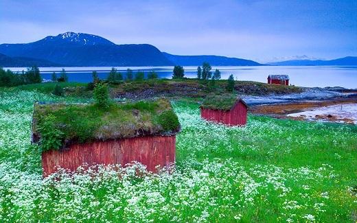 Những ngôi nhà nhỏ xinh này ắt hẳn là của nàng công chúa hay nàng tiên nhỏ nào đó. Cánh đồng hoa bắt mắt bao xung quanh các ngôi nhà càng làm khung cảnh thêm thơ mộng.