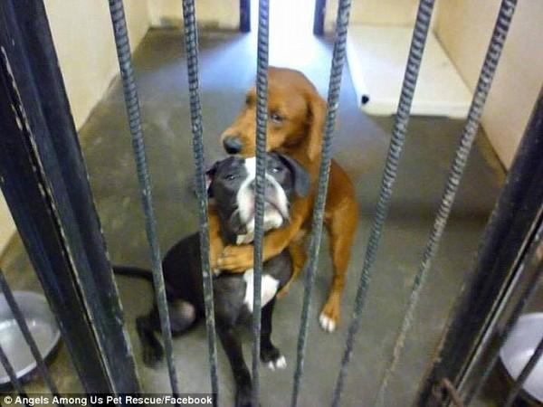 Xúc động mạnh trước cảnh hai chú chó ôm nhau chờ chết