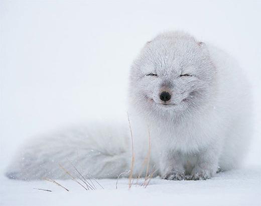 """""""Hạnh phúc là khi có lớp lông dày che chở qua mùa đông""""."""