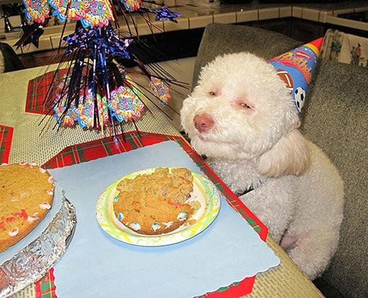 """""""Có được bữa tiệc sinh nhật hoành tráng thật là hạnh phúc""""."""