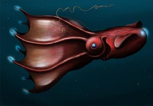 Khác với các loài thông thường, loài mực khổng lồ dưới đáy biển sâu có các xúc tu phát sáng. Riêng với da chúng, nó cũng không có màu sắc cố định mà thay đổi tùy vào vị trí và điều kiện ánh sáng.
