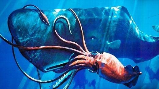 Con mực lớn nhất thế giới được bắt lên có chiều dài lên tới 13 mét, nặng khoảng 450kg, và nó hoàn toàn quật ngã một con cá voi.