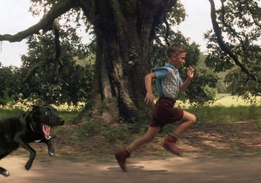 Xuất hiện cả trong phim Forest Gump và rượt vai chính chạy té khói.