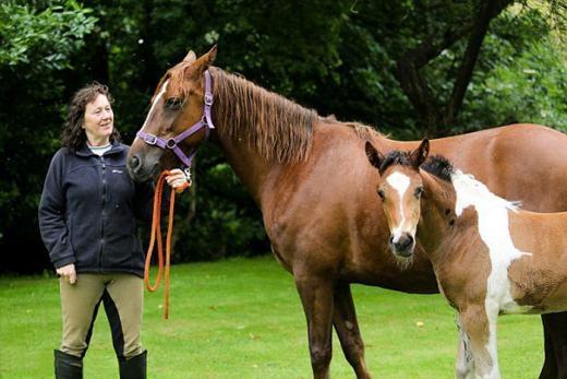 Trầm trồ những chú ngựa có bộ lông hàng độc không đụng