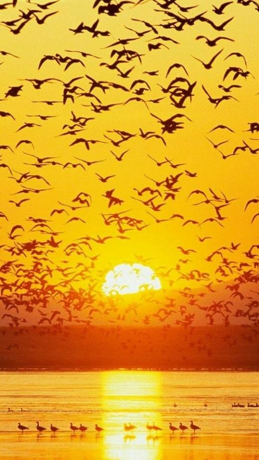 Bầu trời biển Ninh Bình điểm xuyết những cánh chim.