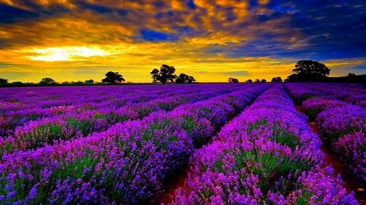 Provence là một vùng đất thanh bình, nên thơ nằm ở đông nam nước Pháp, bên bờ biển Địa Trung Hải.