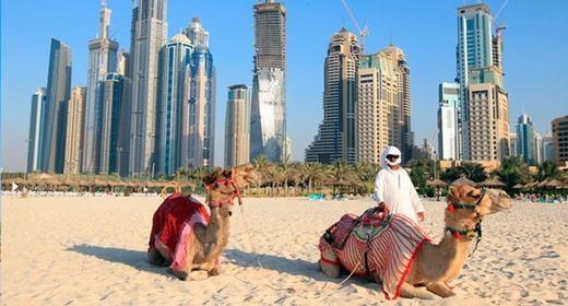 Họ thường xuyên cưỡi lạc đà đi dạo trên bãi biển...