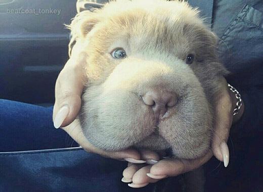 Mặt mâm dễ thương chưa?