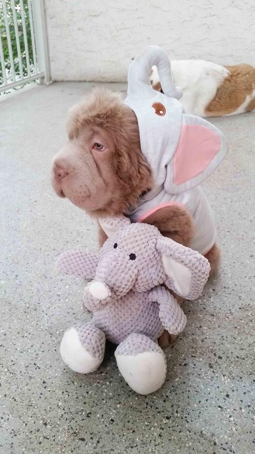 """""""Tui là con voi! Con voi nha! Nhớ chưa?"""""""