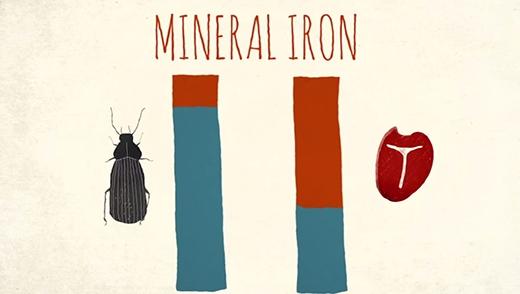 Côn trùng chứa nhiều chất sắt hơn cả thịt bò.