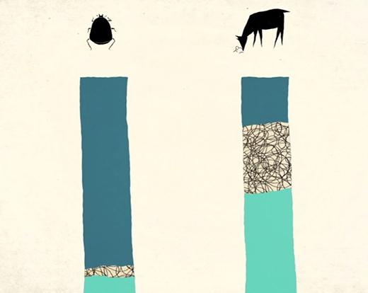 Nuôi côn trùng giảm thiểu CO2, thức ăn, nước uống và chất thải.