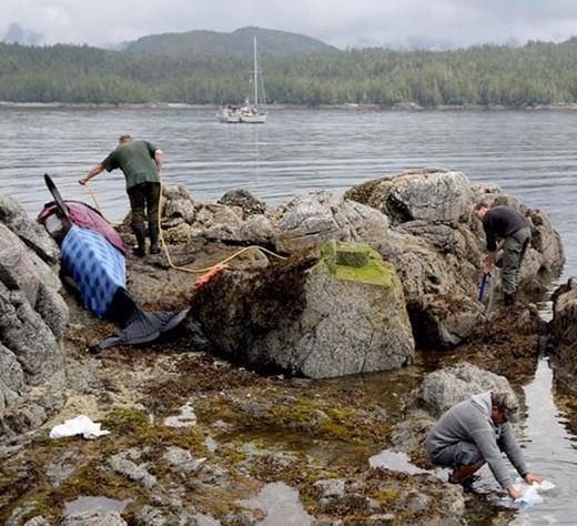 Lực lượng cứu hộ đã cùng nhau hợp sức tưới nước lên người chú cá voi trong suốt sáu giờ.
