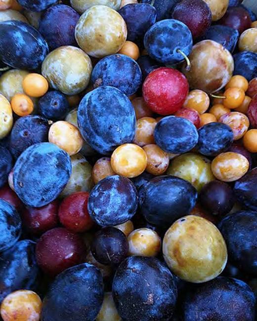 """""""Nếu chỉ cần trồng 1 cây mà có tới 40 loại quả khác nhau như thế này thì còn gìtuyệt bằng""""."""