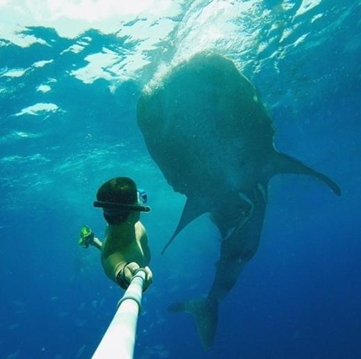 """Một khoảnh khắc để đời với """"cư dân vĩ đại"""" của biển cả."""