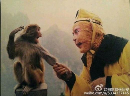 """""""Mỹ hầu vương"""" Lục Tiểu Linh Đồng làm quen với khỉ thật, nhận đồng loại."""