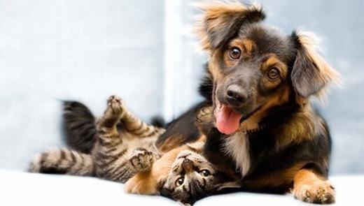 Bất ngờ khi Tây Ban Nha công nhận chó mèo là công dân hợp pháp