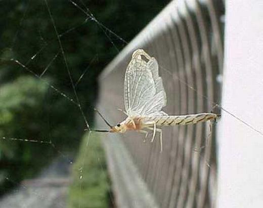 Kinh hoàng hàng triệu con côn trùng tấn công người dân
