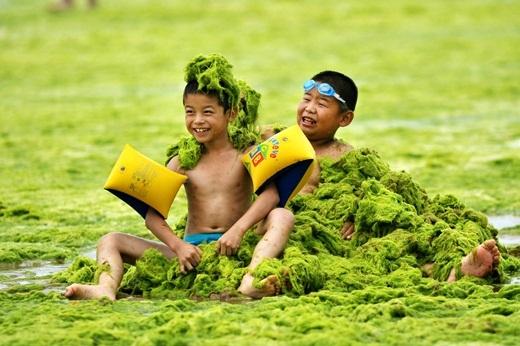 Những đứa trẻ đang chơi tại bãi biển bị bao phủ bởi một lớp tảo xanh cực dày tại Thanh Đảo, Trung Quốc. Một lượng lớn tảo xanh không độc đã tràn vào và bao phủ bờ biển Thanh Đảo vào tháng 6 và tháng 7 năm nay.
