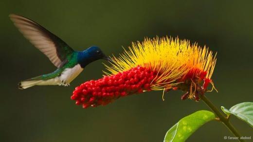 Một chú chim ruồi bên cạnh bông hoa.
