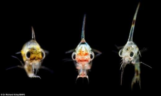 Còn đây là 3 sinh vật phù du dưới nước.