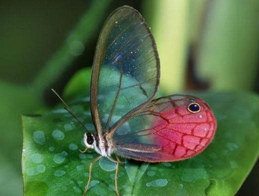 Chú bướm đầy màu sắc trên chiếc lá.