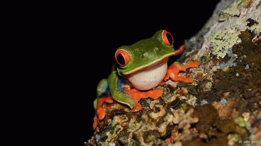 Một chú ếch dễ thương với đôi mắt và bàn chân màu cam.