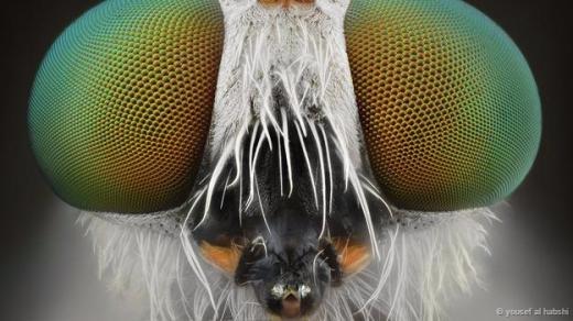 ...và đôi mắt của một chú ruồi. Bạn thấy đáng sợ hay đáng yêu?