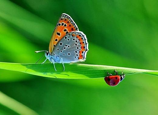 Bọ rùa và chú bướm nhiều màu sắc trên một chiếc lá.