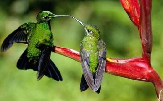 Tình yêu được thể hiện giữa hai vợ chồng chim, bạn có cảm thấy ghen tị với hạnh phúc của chúng không?