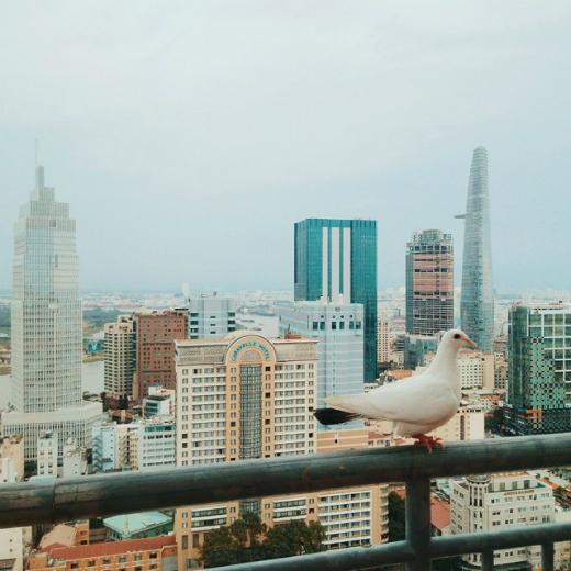 Góc ảnh trên cao sẽ mang lại cho bạn những cảm nhận rất khác về Sài Gòn mà chúng ta đang sống. Một Sài Gòn hiện đại nhưng không quá ồn ào. (Ảnh: IG kaganagi)