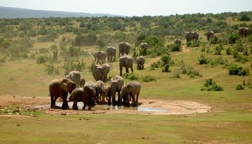 Công viên quốc gia Kruger có nhiều loài động vật có vú lớn hơn bất kì khu bảo tồn cấm săn bắn nào khác ở châu Phi, bao gồm cả 5 loài mãnh thú lớn châu Phi (sư tử, báo, voi, tê giác và trâu).