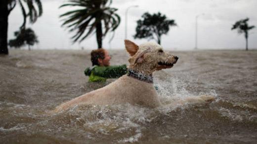 Lũ lụt thật là khổ!