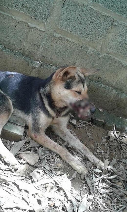 Không may mắn như Lucky, chú chó ở Hà Nội đã ra đi vĩnh viễn.