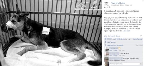 Hình ảnh và dòng chia sẻ đầy xúc động củaTrạm cứu hộ mèovề chú chóShin.