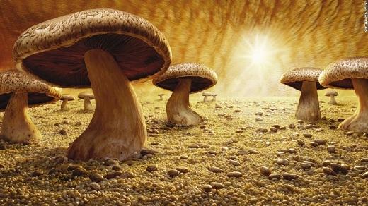 Mushroom Savanna – tác phẩm đầu tay của Carl Warner.