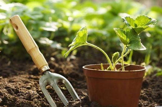 """Cây cối có khả năng nhận diện """"họ hàng"""" kề chúng để cùng dựa vào nhau phát triển mạnh hơn."""