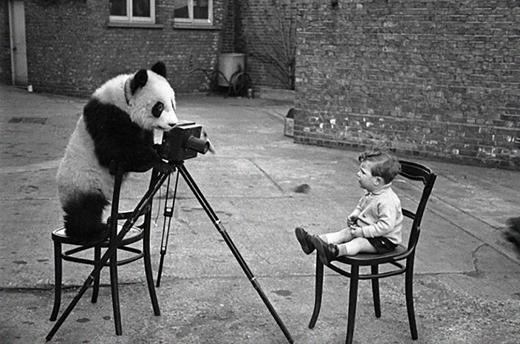 """""""Bé cưng ngoan ngoan, ngồi yên cho anh chụp nhé!""""."""