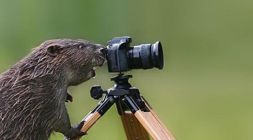 Có điều gì khiến nhiếp ảnh gia của chúng ta hốt hoảng thế nhỉ?