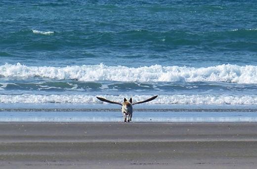 Mải mê đuổi theo chú chim, bé cún này đã vô tình trông oách như đang tung cánh.