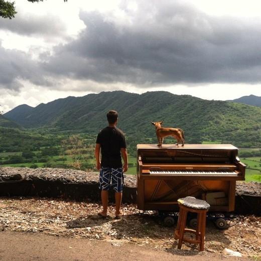 Tròn mắt trước chàng trai du lịch thế giới cùng... piano và chó