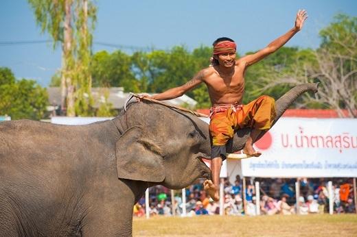 Lễ hội là một cuộc diễu hành voi với hơn 300 con. Du kháchrất thích người dân tái hiện lại cuộc sống của các chú voi hay một trận bóng đá với voi hoặc trò chơi kéo co của các chú voi. Ngoài ra còn có một bữa tiệc lớn cho voi, nơi một bàn gỗ dài được bày ra đầy đủ các loại thực phẩm mà con voi yêu thích.